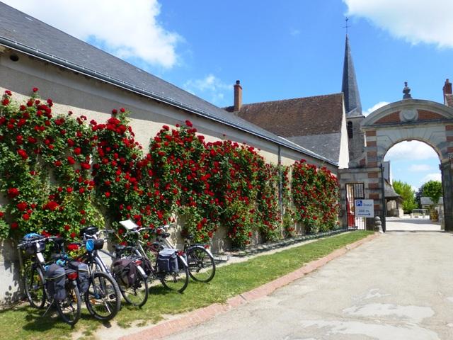 Lovely roses outside
