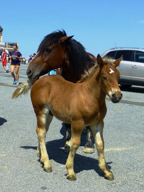 Lovely little foal