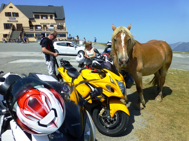 The ponies take great interest in the bikes
