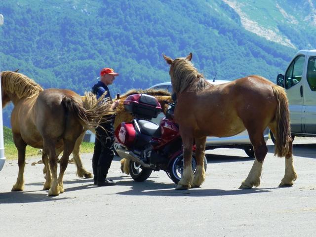The three ponies were rocking the bike!