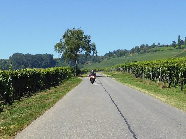 We ride through vineyards