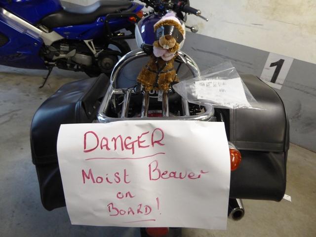 Bev the beaver's been returned!