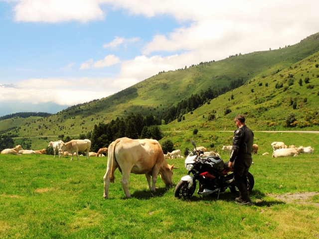 The cows like our Street Triple !