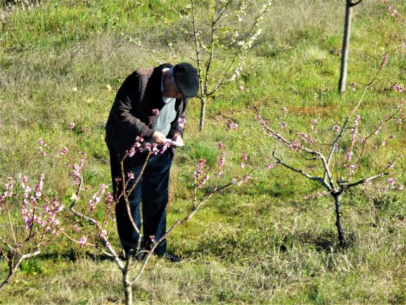 Caring for the orchards