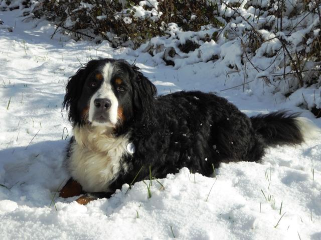 Della loves the snow!