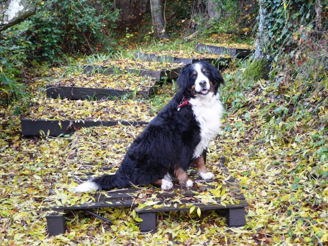 Della loves the fallen leaves