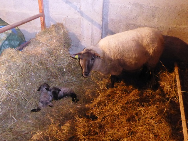Twins born New Year's Day