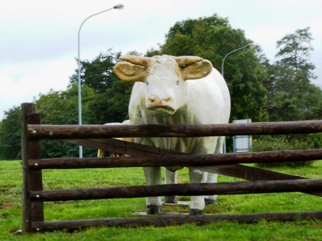 Strange cows!!