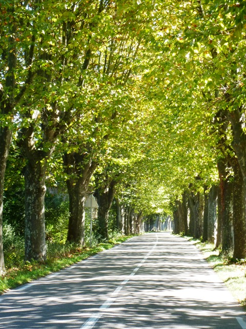 We ride through tree-lined roads
