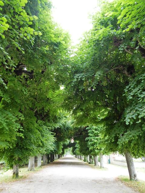 Take a stroll through the trees