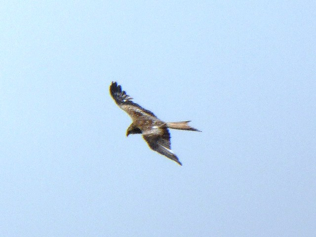 With Kites flying overhead