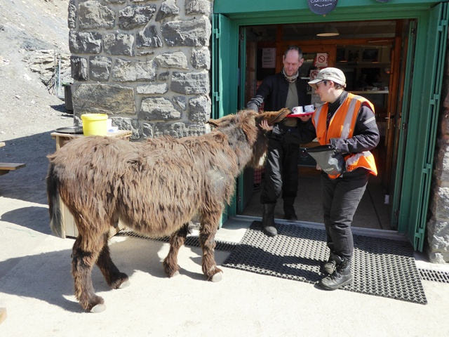 Howard & Alice with the resident donkey