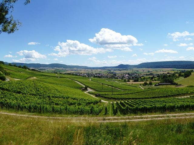Ride through vineyards...