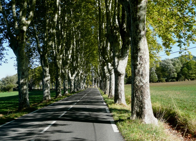 Then we ride lovely tree lined roads